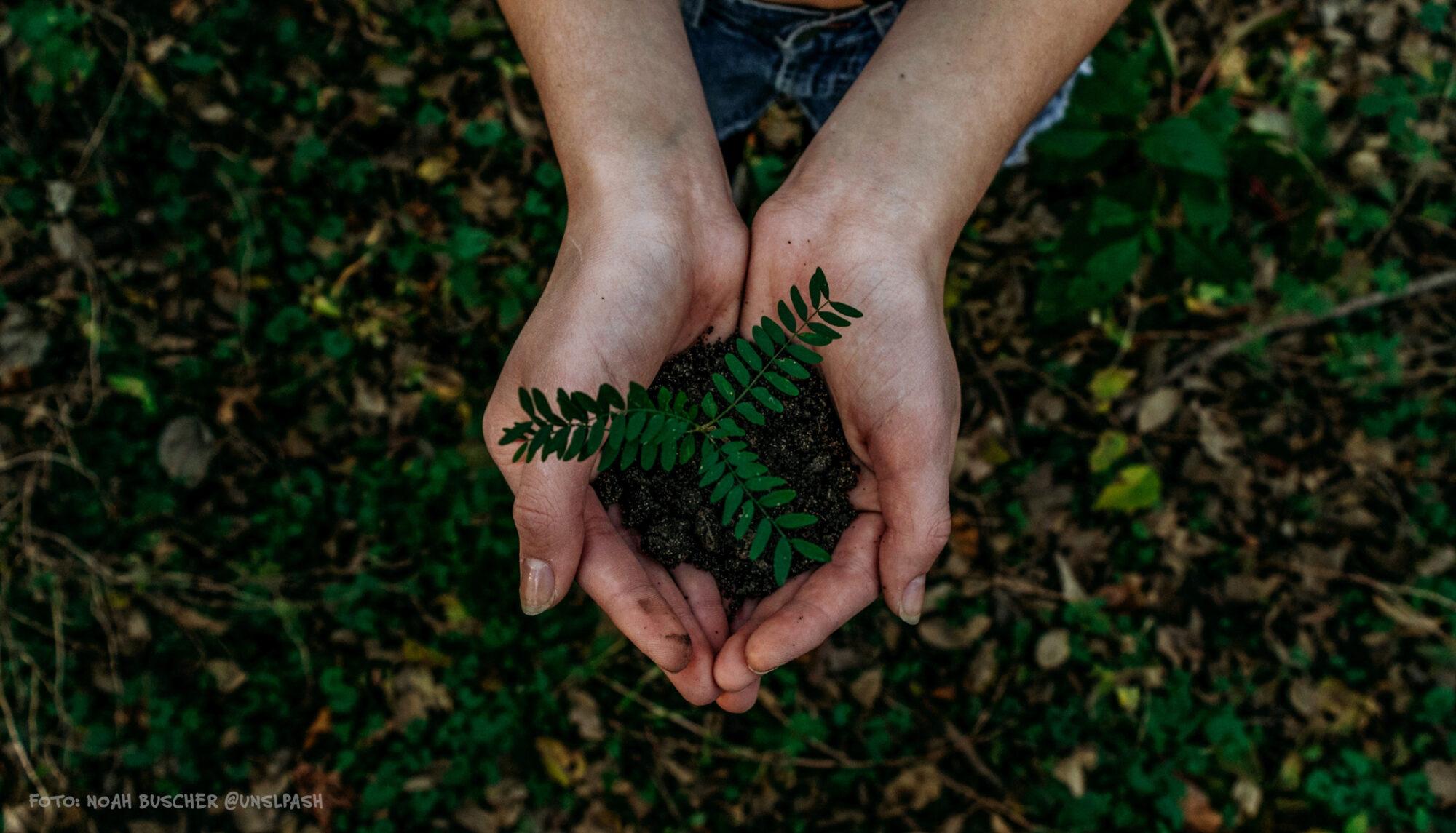 Foto von Händen - über Waldboden - vorsitchtig zeigen sie eine Handvoll Erde, darin ein zarter Setzling eines Baumes